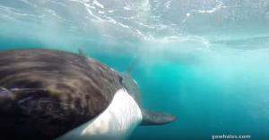 Mooi: Orka's op de GoPro